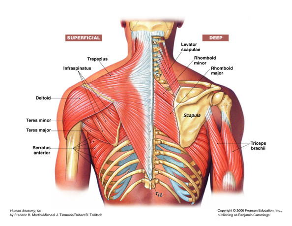 Why Is My Shoulder Hurting What Your Doctor May Have Overlooked